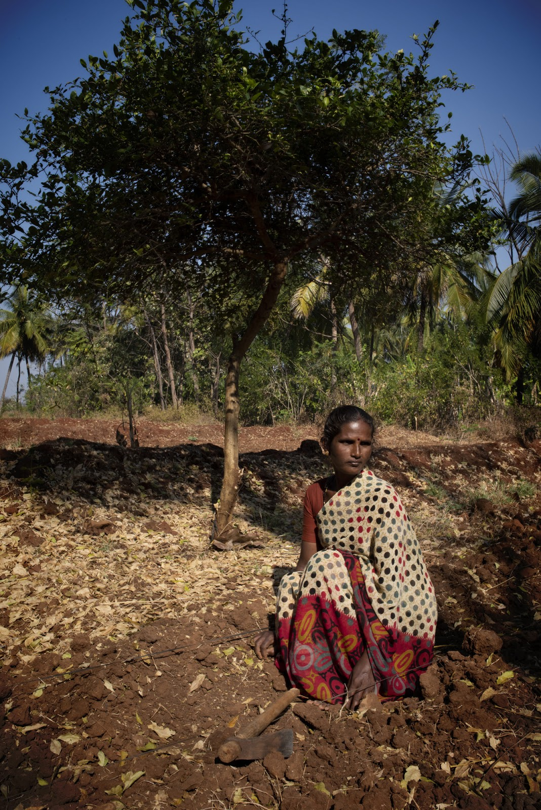 THE WANCHO: JHUM CULTIVATION AMONG WANCHO TRIBE OF